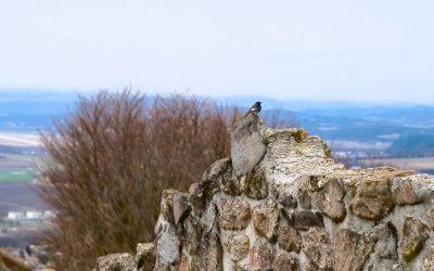 pusty_hrad (2)
